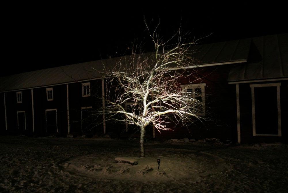 Talvivalaistu puu